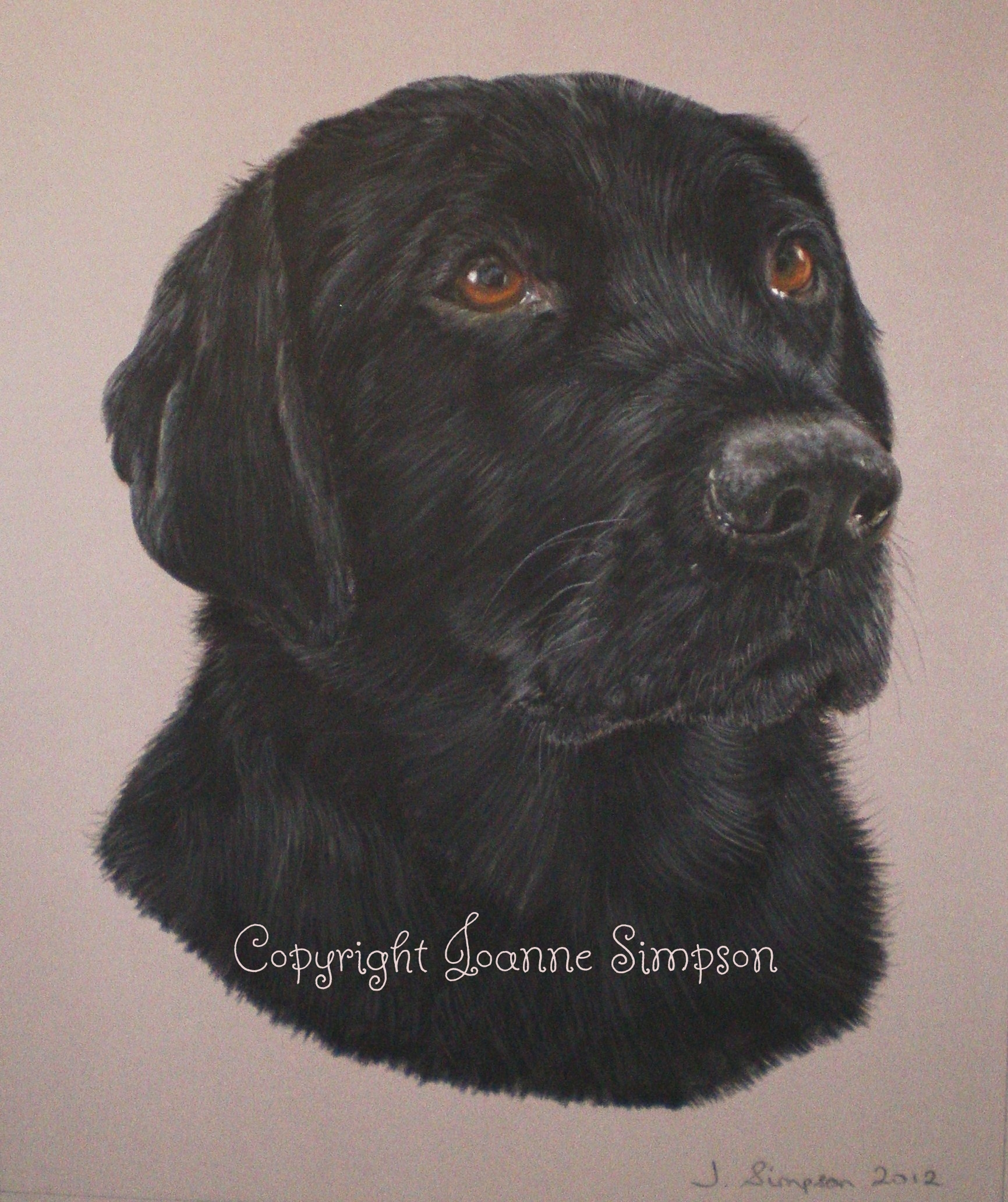 Ebony - Black Labrador