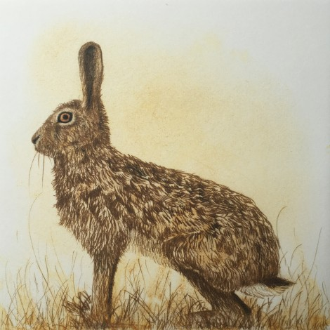 The Watchful Hare