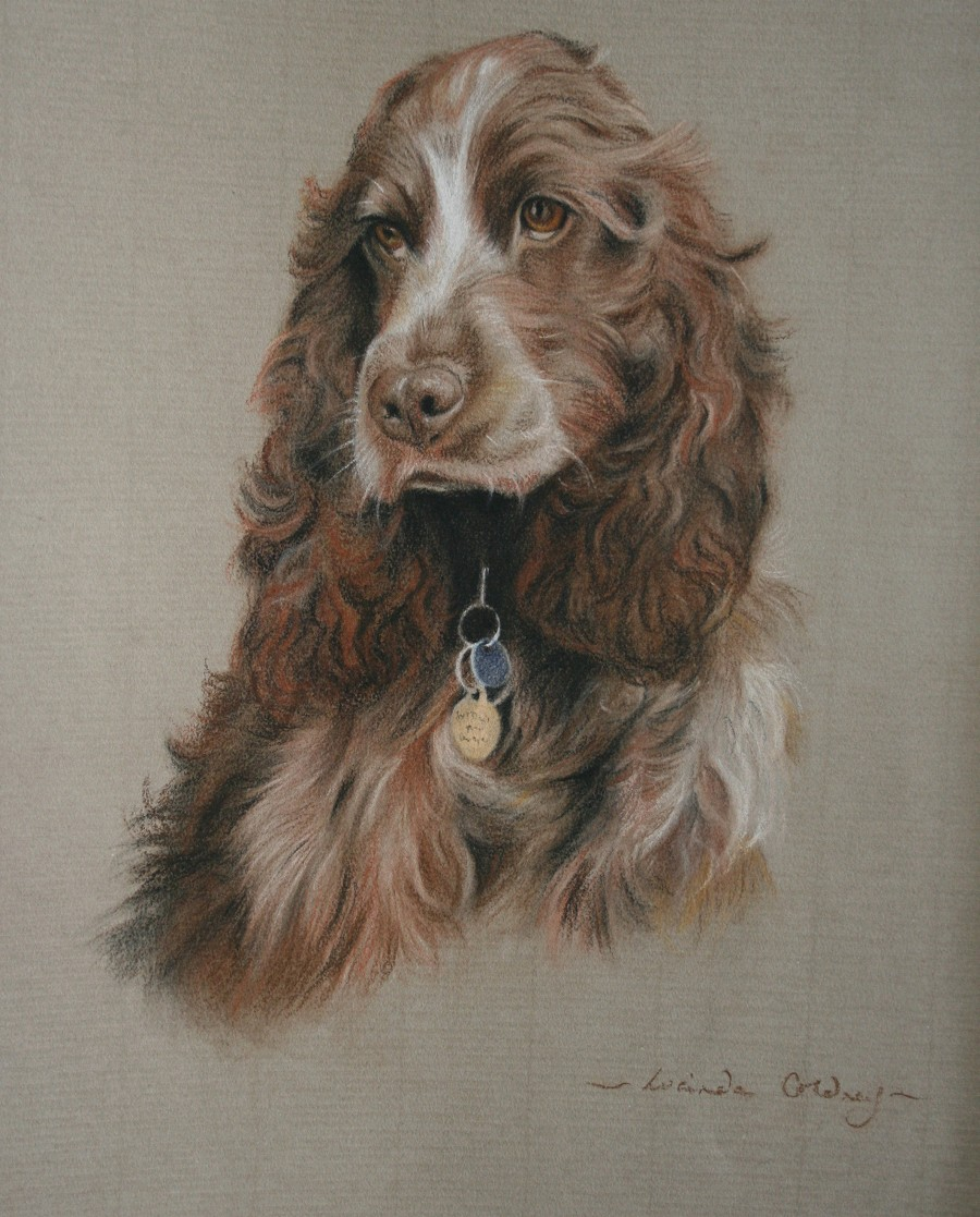 Dog Portrait - Pastel on Paper