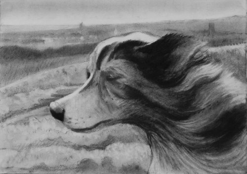 Dog on a windy hill