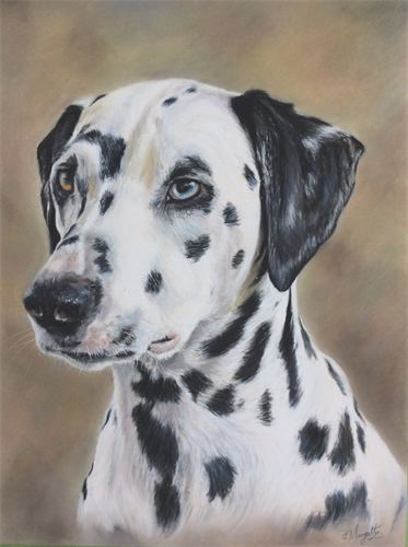 Dalmation in pastels