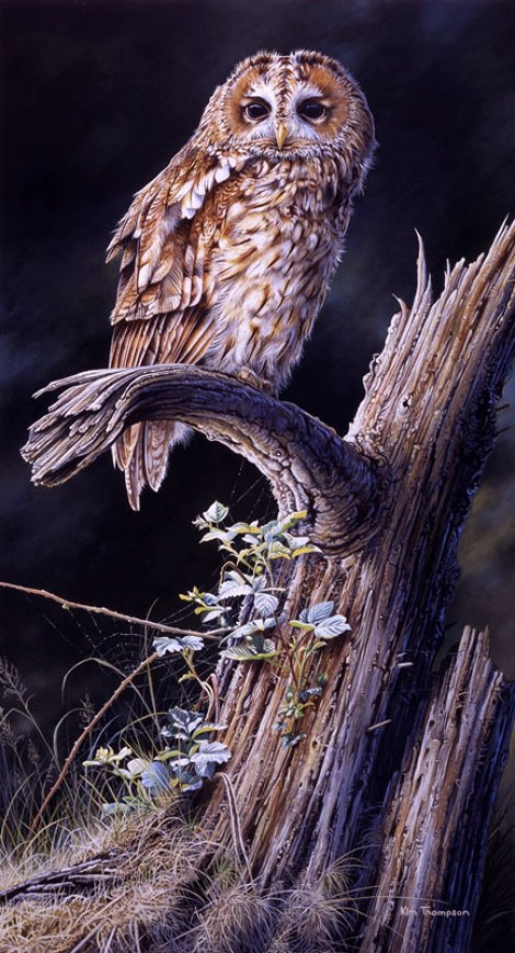 Tawny Owl and Dead Tree