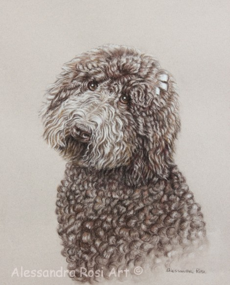 Dog Portrait - Pen and Brown Ink Drawing
