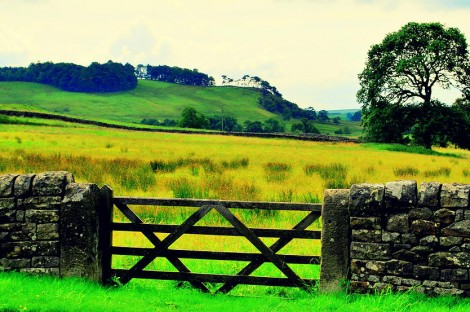 Redesdale View with Gate