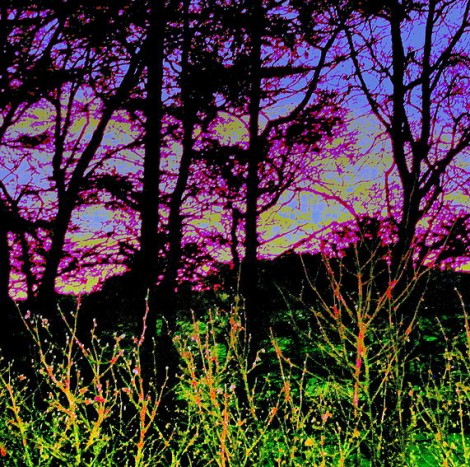 Redesdale sunset with Trees II
