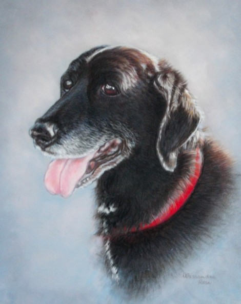 Dog Portrait - Soft Pastel painting