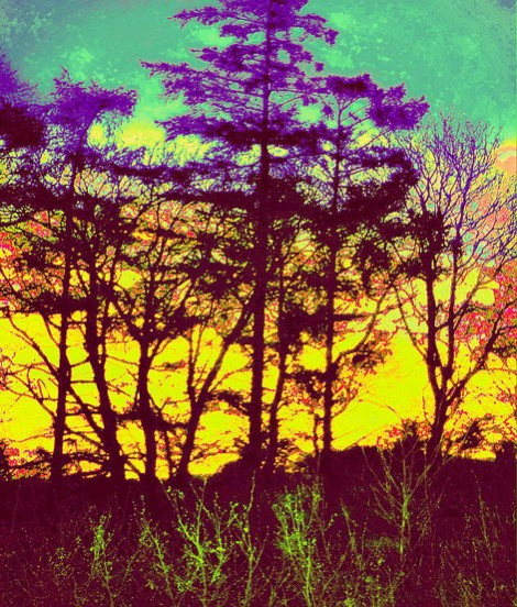 Redesdale Sunset with Trees