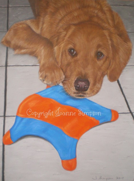 Toby - Golden Retriever with his favourite toy