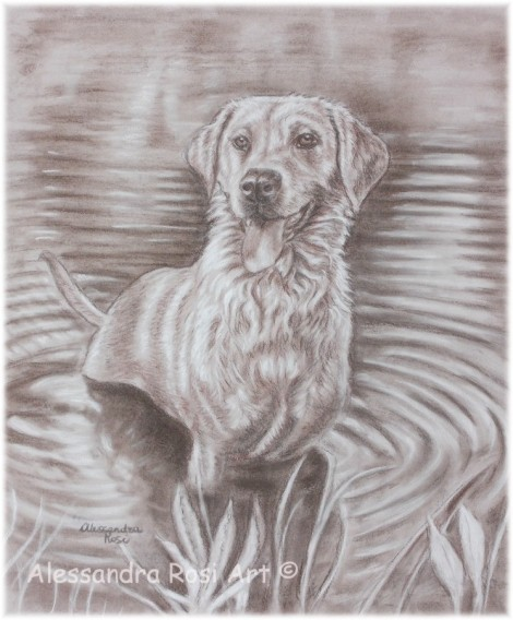 Dog portrait - Sepia Drawing