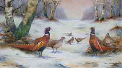 Pheasants in Snow