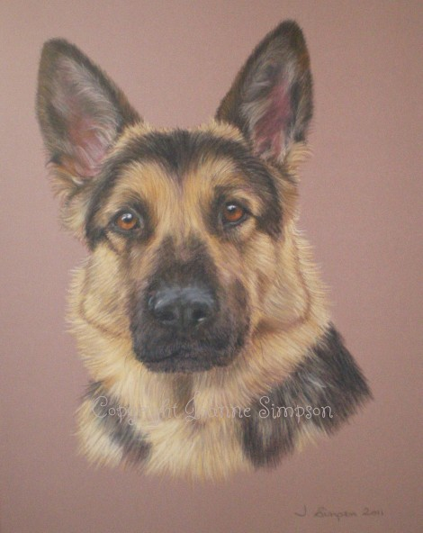 Arthur - German Shepherd