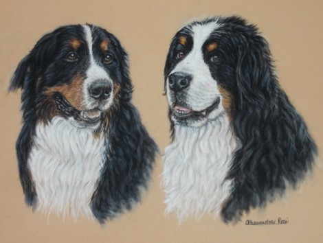 Dog Portrait - Pastel